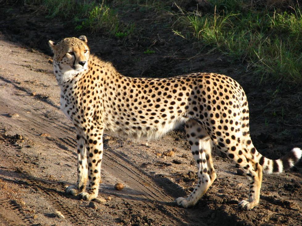 Maasai Mara, čita