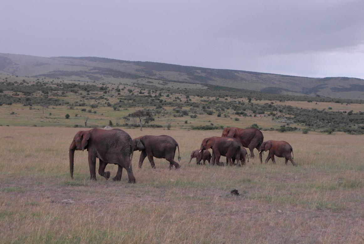 Maasai Mara, slonovi