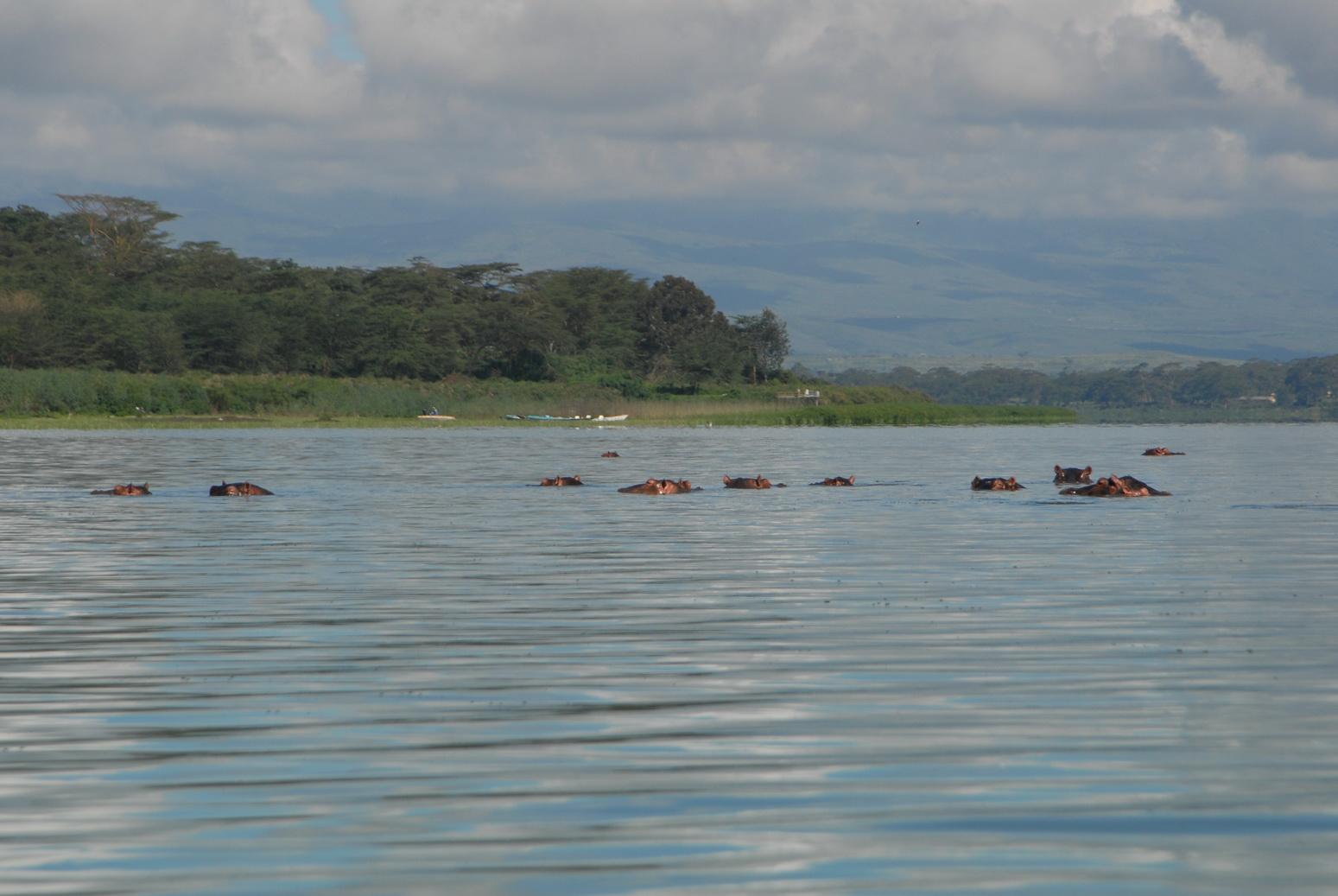 Jezero Naivasha