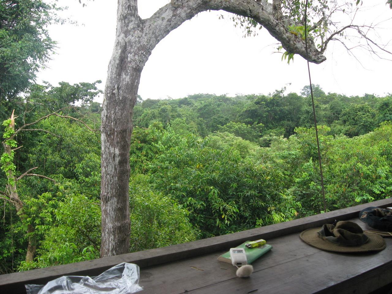 Pogled sa osmatračnice na džunglu